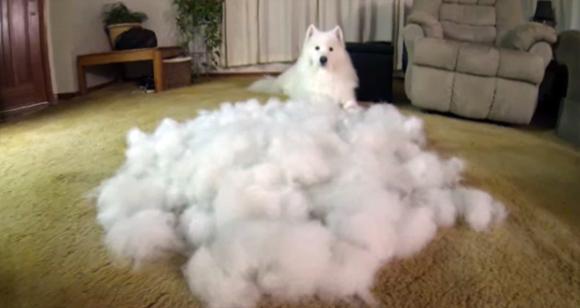 犬の抜け毛 アレルギー
