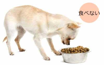 食べない犬